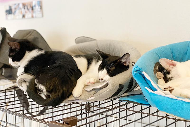 保護猫シェルター Queue